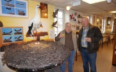 Schiersteiner Heimatmuseum erhält ein neues Storchen-Präparat