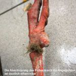 abgeschnürter storchenfuss