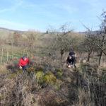 arbeiten für umwelt auf dem Grundstück des storchenvereins (2)