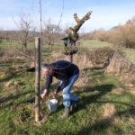 arbeiten für umwelt auf dem Grundstück des storchenvereins (4)