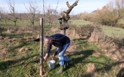 Arbeiten für die Umwelt auf dem Grundstück des Storchenvereins